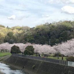 藤沢市の地域活動